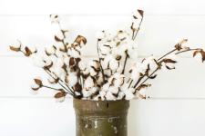 cotton-stem-3_1024x1024