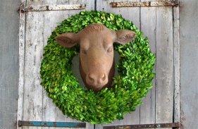 cow-head-1